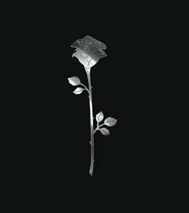 roza pojedyncza